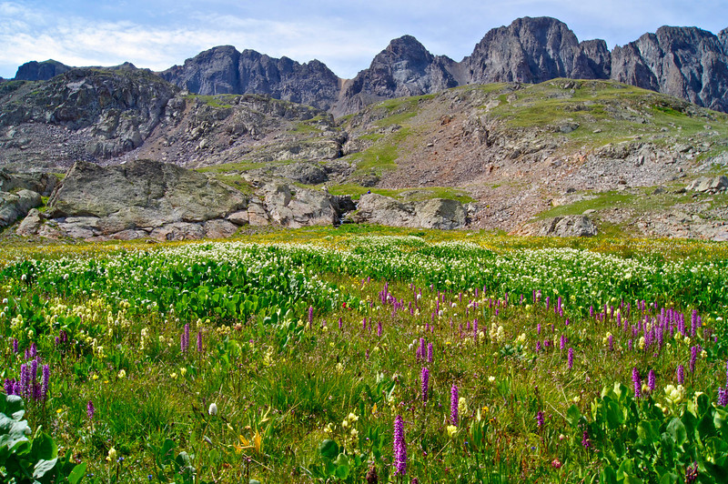 Wildflowers in the upper American Basin beneath Handies Peak; Colorado San Juan Range.
