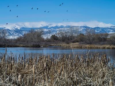 Geese by Indian Peaks