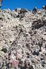 Downclimbing at 14,000 feet on Crestone Needle's  upper south face ; Colorado Sangre de Cristo Range.