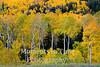 Colorado (Grand Mesa)