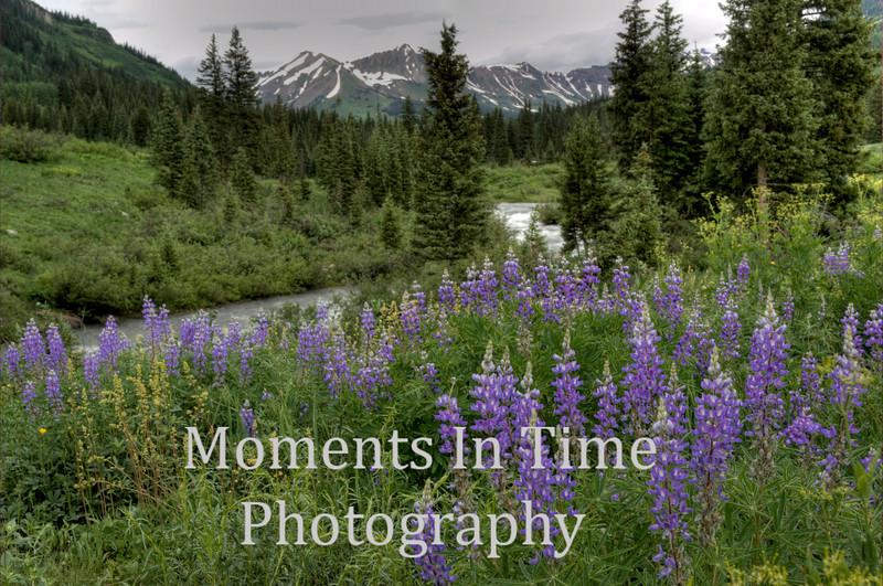 lupine, stream and peaks behind