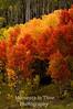 Aspen rainbow vert