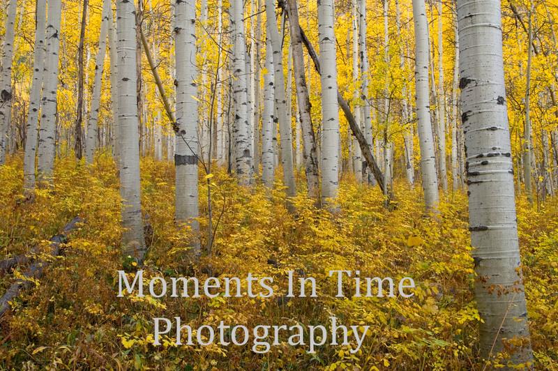 autumn gold, no sky, ground cover