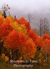 Flaming red aspen
