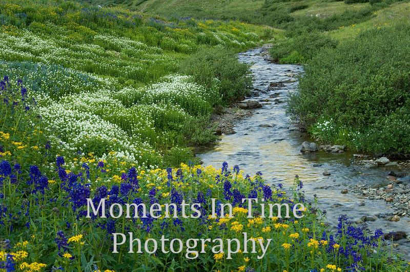 Am Basin stream jpg