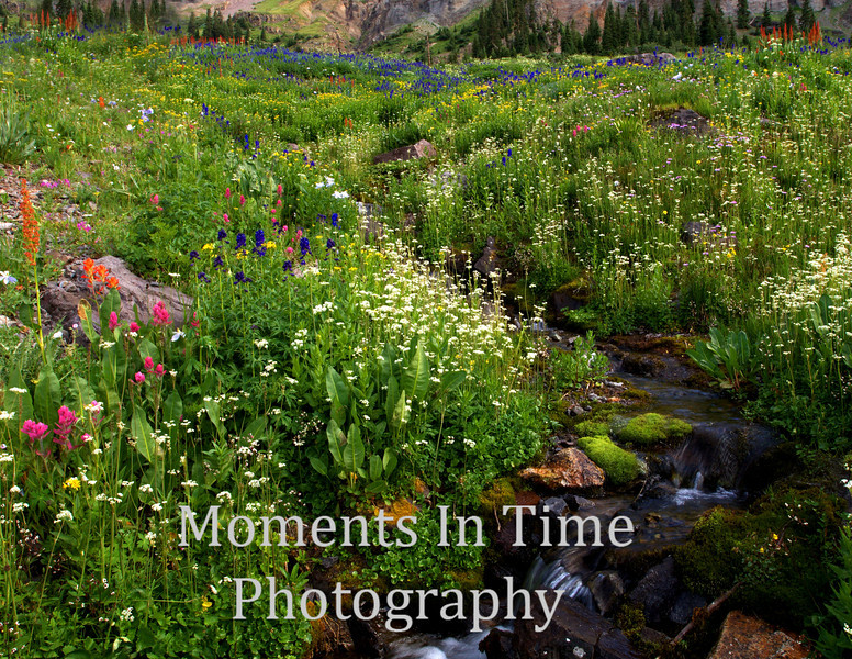 colorful wildflower meadow, tiny brook