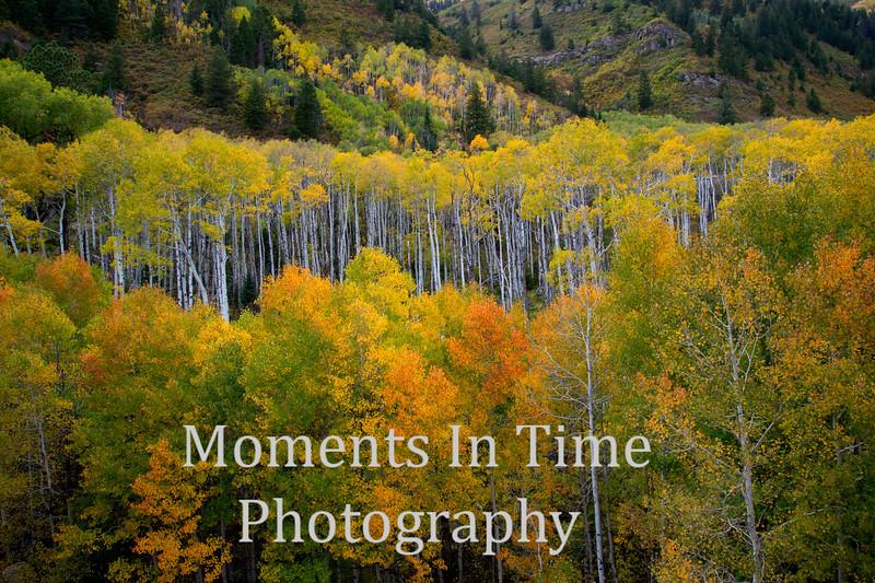 Colorado (McClure Pass)