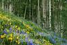 Hillside Meadow -