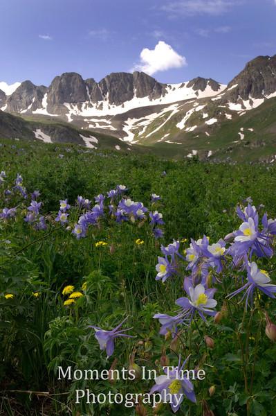 snow on peaks, columbine meadow