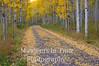 aspen springkled road om fprest