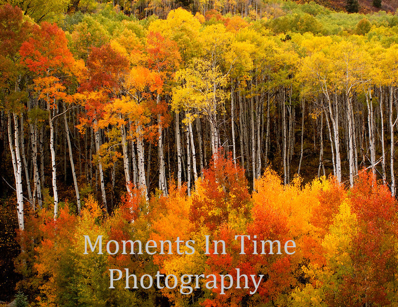 Array of autumn