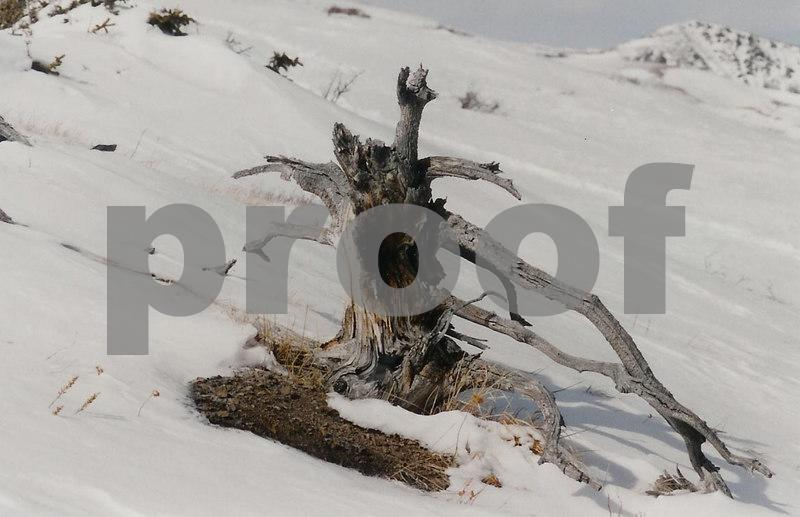 Lasting another winter on a Colorado mountain