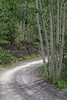 Curve heading up Imogene Pass among the Aspen trees.