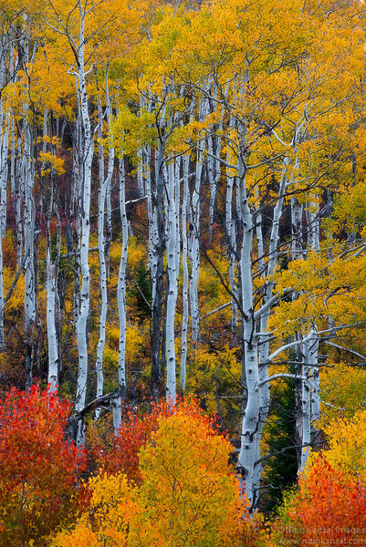 Eye Candy - Fall Foliage in Colorado