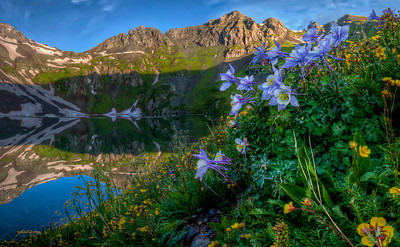 Colorado Blue Columbine and an assortment of other wildflowers soaking up the morning light after a night of being bathed in rain by Clear Lake in the San Juan Mountains.  This morning was really my first Colorado Wildflower experience, and one that I won't soon forget.  All year long, I've been envisioning Columbine Blossoms framed by a mountainous backdrop, and this location on this morning was ideal.    I had the peasure of visiting other wildflower hotspots in the San Juans during these past couple of weeks.  All of them have proven to be exquisitely beautiful with dizzying varieties of wildflowers... but none of them were the perfect experience of this morning!  This is a panoramic HDR created from 6 Vertical HDR frames stitched in Photoshop CS5.  HDR's created from 3 RAW images in Photomatix Pro.
