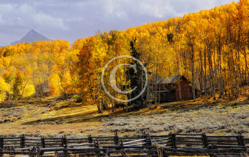 Beautiful aspens in fall colors with an old cabin near Ridgway Colorado