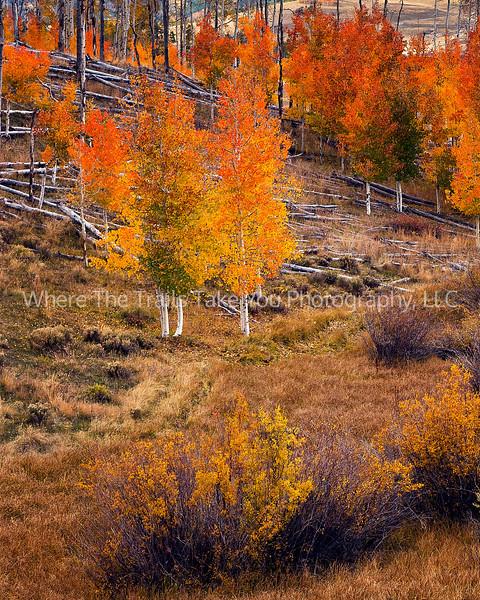 30  Autumn Aspen Near Telluride