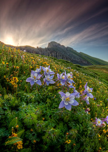 "A Transcendental Glacial Dew-filled Wildflower Morning!  This image was taken at Clear Lake in the San Juan Mountains near Silverton, Colorado.  I've been uber excited all year to photograph Colorado's Wildflowers at their peak.  Mainly looking forward to photographing wild Columbines with a mountain backdrop, I was as giddy as a school-boy when I discovered this lake-side field of beauty.  When I finished for the morning, I had breakfast in Silverton and posted to Facebook, ""There's nothing like breathing morning dew in a field of wildflowers at sunrise by a reflective glacial lake at 12,000 feet!""  My good friend Loren ""Happy Om"" Baum replied, ""...Dew is magic, glacial dew is transcendant!""    I was indeed floating!    This is an HDR from 3 RAW images created using Photomatix Pro and Photoshop CS5."