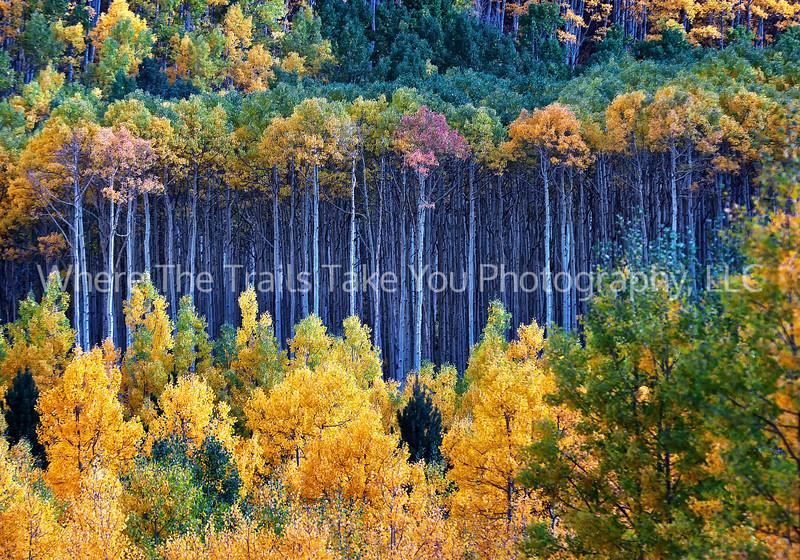2.  Colorado Autumn scenery
