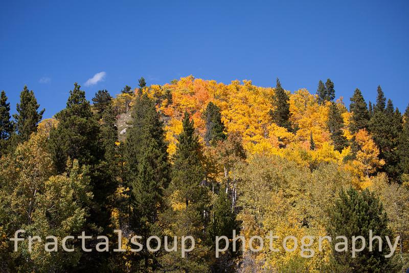 Aspen Covered Mountain