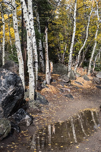 Fall color Reflections, Alberta Falls Trail, Rocky Mountain NP