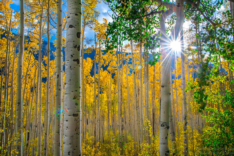 Aspen Dreams - San Juan Mountains, Colorado