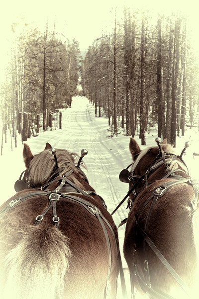 Sleigh Ride - Fraser, CO