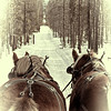 Sleigh Ride - Fraser, CO