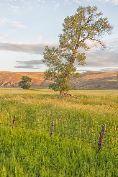 'Green Pastures'
