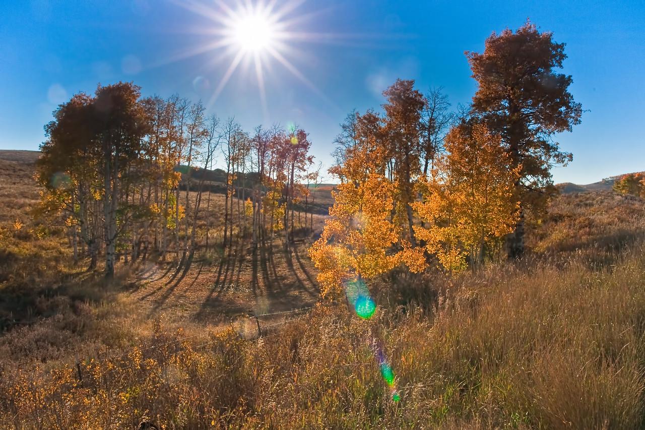 """Twilight of the Ents"" - Aspen Grove - Ohio Pass Rd., Gunnison Co., CO"