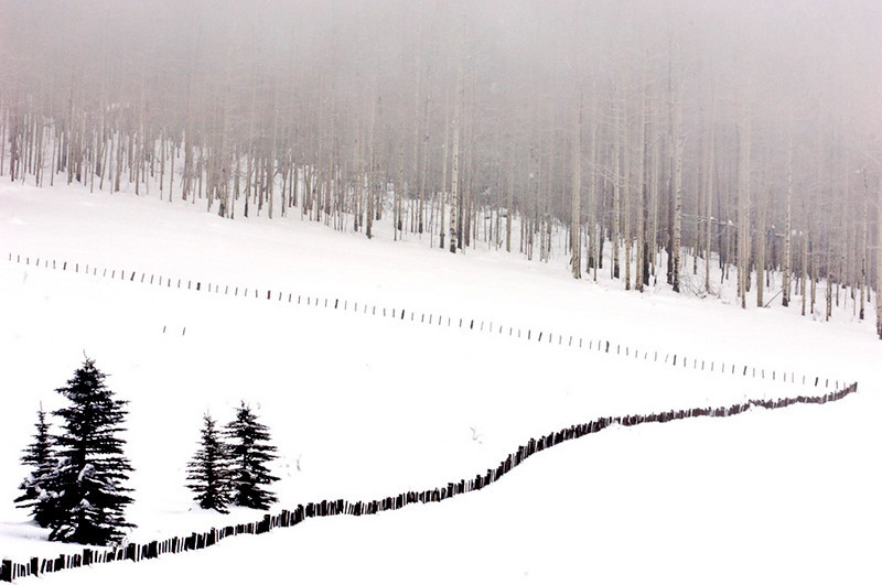 Fence Line- Between Durango, Co and Purgatory Ski Area.