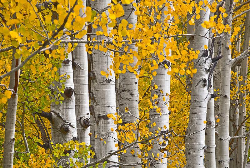 Colorado, San Juan Mountain, Rocky Fall Colors, Aspen, Foliage, Landscape, 科罗拉多 洛矶山 秋色, 风景