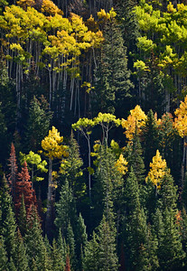 Autumn Mixture.  Castle Creek Valley near Aspen, Colorado