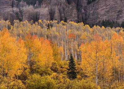 Aspen, spruce and palisades near Silver Jack