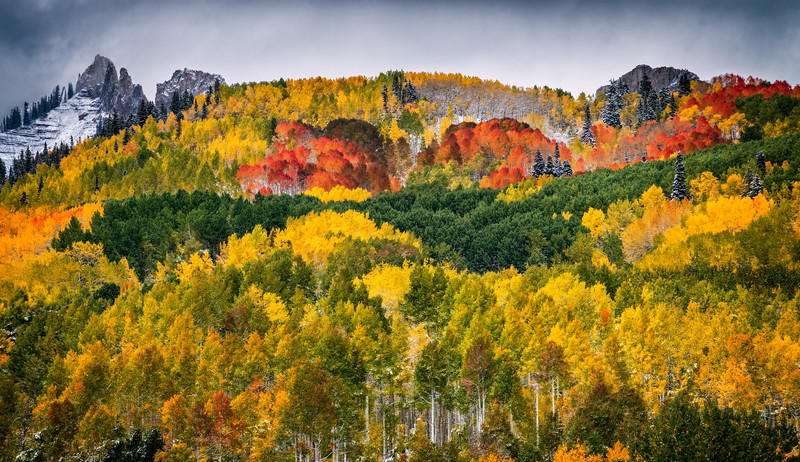 Kebler Pass Fall Colour Beauty