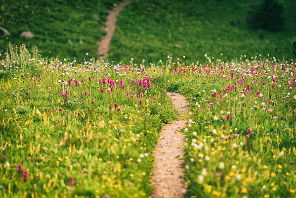 Floral Fields & Path
