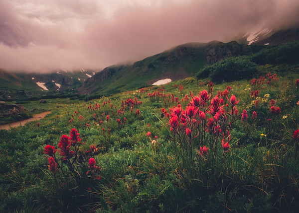 Moody Indian Paintbrush