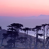 Morning Cyprus,<br /> Pt. Reyes National Seashore, California.