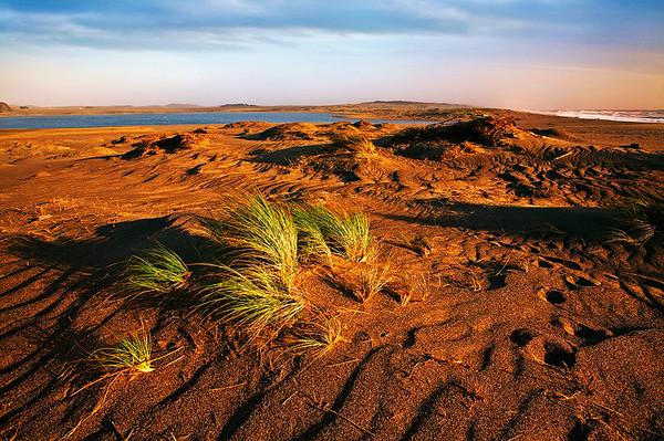 Ocean Dunes,<br /> Pt. Reyes National Seashore, California.