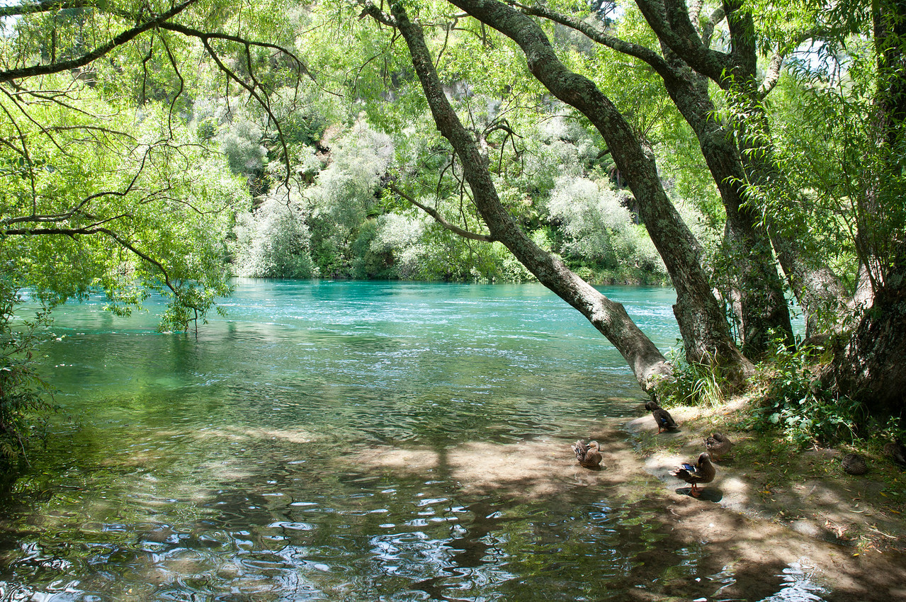 Waikato River, just above the famous Huka Falls.  Fed from the massive crater that is Lake Taupo, this is one beautiful but turbulent river.