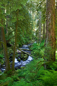 Multnomah Creek, Columbian Gorge, OR
