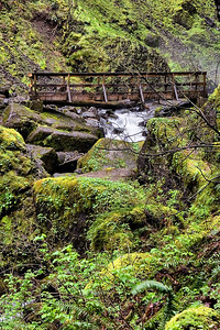 Elowah Falls Footbridge     Sigma 18-50mm f/2.8 EX DC