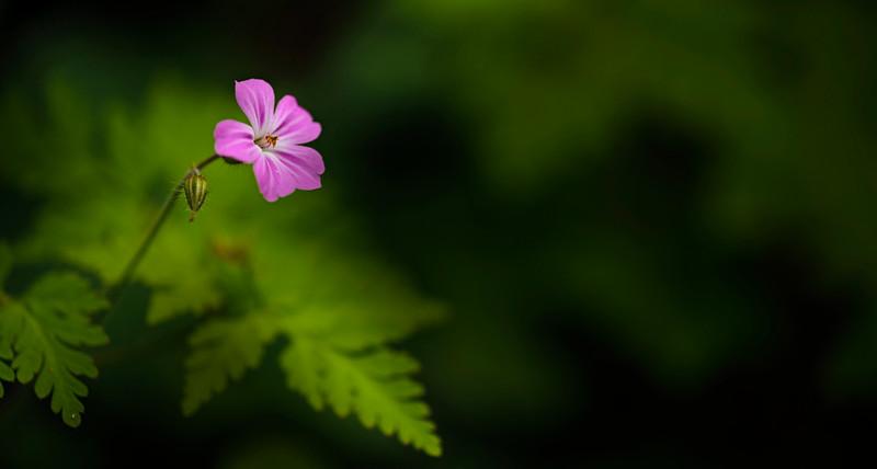 lone_flower