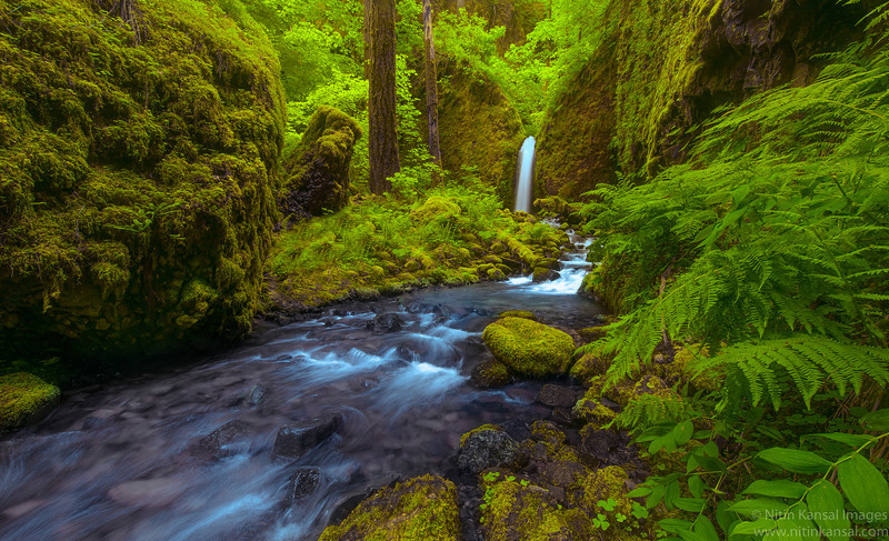 Mossy Grotto Falls in Oregon