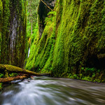 Hidden Falls<br /> Spring green glow inside deep canyons of Oneonta gorge in columbia river gorge area.  This hidden fall in end is a little surprise gift of wading this canyon and passing over boulders at entrances.