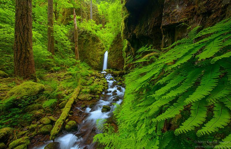 Mossy Grotto waterfall  ~ peak spring season
