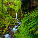 Mossy Grotto waterfall  ~ peak spring season