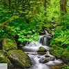 Sorenson Creek - Eagle Creek Trail