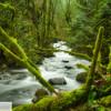 Moffett Creek - 149
