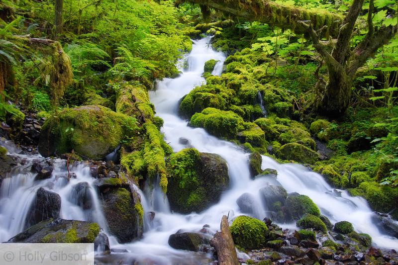 Trail near Fairy Falls